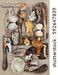 Driftwood  Seashells And Rocks...