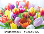 Stock photo mix of tulips flowers near the window 592669427