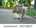 Squirrel Close Up On Street