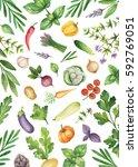 watercolor vegetables and herbs ... | Shutterstock . vector #592769051