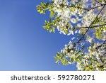 Spring Flowers Background/ Spring Flowers Background