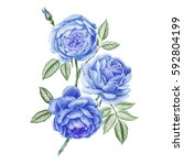 watercolor hand painted roses.... | Shutterstock . vector #592804199