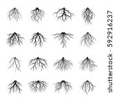 big set of black roots. vector... | Shutterstock .eps vector #592916237