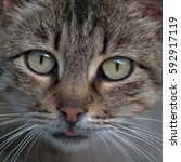 Small photo of Portrait of a homeless cat is gray, with gray-green eyes, white whiskers and a wary glance, scared.