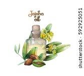 watercolor jojoba design. hand... | Shutterstock . vector #592925051