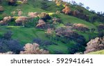 Rolling Green Hills Of...