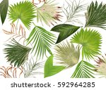 mix green leaves of palm tree... | Shutterstock . vector #592964285