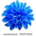 flower   blue  dahlia ...   Shutterstock . vector #592975559