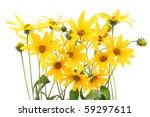 jerusalem artichoke  helianthus ... | Shutterstock . vector #59297611