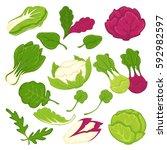 lettuce salads leafy vegetables.... | Shutterstock .eps vector #592982597