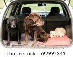 Three Labrador Retriever Dogs...