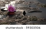Waterlily After The Rain In Th...