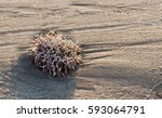 Red Sea Plant On A White Beach .