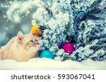 Cat Sitting In Snow Near Fir...