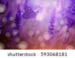 Butterfly And Lavender Wild...
