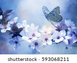 Butterfly And Cherry Blossoms...