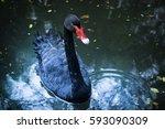 Black Swan Dark Tone