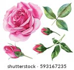 Stock photo set of roses buds leaves twigs for invitations postcards greetings watercolor botanical 593167235