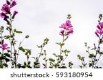beautiful colorful flowers as... | Shutterstock . vector #593180954