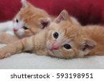 Stock photo pair of orange kittens 593198951