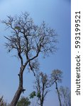 Small photo of Deciduous Dipterocarp forest, scenic of dry season in Thailand