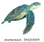 Green Turtle Isolated On White...