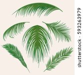 vector palm leaves  jungle leaf ... | Shutterstock .eps vector #593263979
