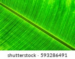 green background from the real... | Shutterstock . vector #593286491