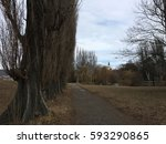High Poplars And Castle Of Nitra