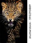 portrait of a leopard in the...   Shutterstock . vector #593293889