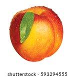 Nectarine With Leaf Wet