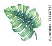 big tropical green leaf of... | Shutterstock . vector #593327957