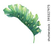 big tropical green leaf of... | Shutterstock . vector #593327975