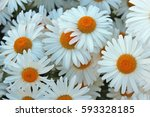 daisy flowers background | Shutterstock . vector #593328185