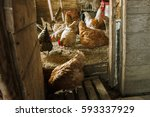 the chickens and roosters in... | Shutterstock . vector #593337929