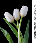 White Tulip Flowers On The...