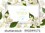 vector jasmine flowers... | Shutterstock .eps vector #593399171