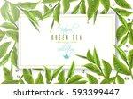 vector green tea horizontal... | Shutterstock .eps vector #593399447
