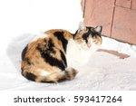 winter  a cat basking in the sun | Shutterstock . vector #593417264
