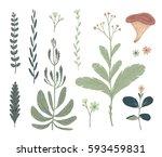floral decorative elements.... | Shutterstock .eps vector #593459831