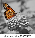 monarch butterfly  color on... | Shutterstock . vector #59357437