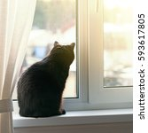 Stock photo black cat sitting on window sill and waiting for spring back view 593617805