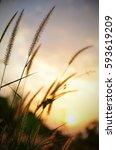 sunset after grass.sky blue... | Shutterstock . vector #593619209