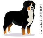Bernese Mountain Dog Vector...
