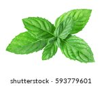 mint isolated on white... | Shutterstock . vector #593779601