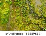A Bunch Of Green Sea Algae