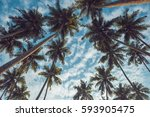 Coconut Palm Trees On Tropical...