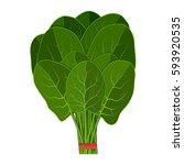 bunch of fresh spinach close up.... | Shutterstock .eps vector #593920535