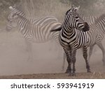 Zebra Beyond The Dust