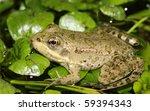 frog   Shutterstock . vector #59394343